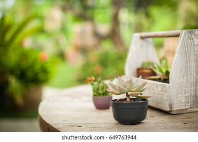 Cactus in a small pot on the table.