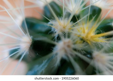 Cactus spines, close-up view, abstract green background