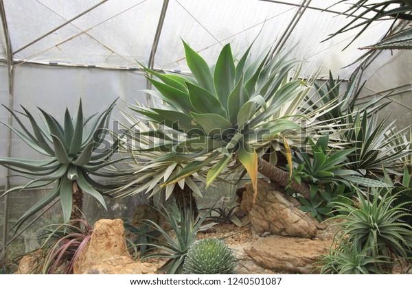 Cactus Succulent Garden Landscape Ideas Stock Photo Edit Now