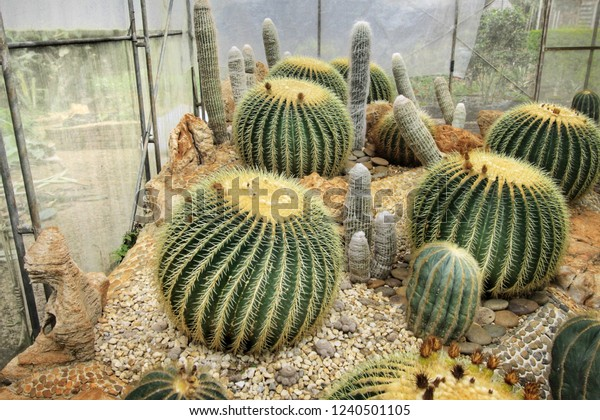 Cactus Succulent Garden Landscape Ideas Stock Photo Edit Now