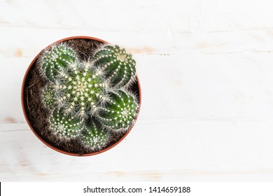 Cactus succulent houseplant in flower pot on white wooden table. Top view.