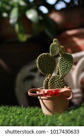 Cactus Succulent on grass in the heart of love, Concept Valentine's Day, Background for text.