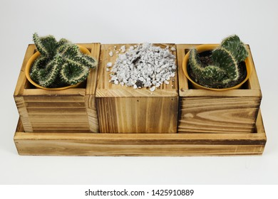 Cactus succulent and perlite potting material isolated on white background