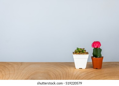 Cactus and succulent pots decoration on wooden table/ Interior  plants for air pollution abatement concept