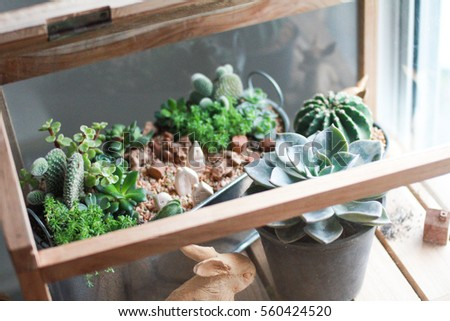 Cactus Succulent Tiny Plant Glass House Stock Photo Edit Now