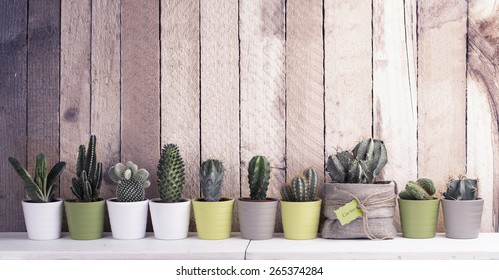 Cactus and succulents collection in small flowerpots. The rustic interior. With retro filter effect