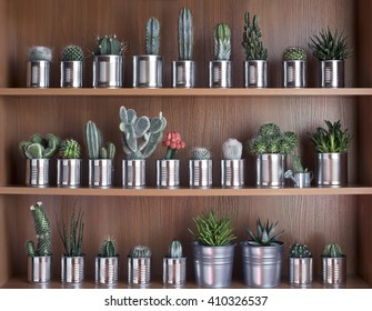Cactus and succulents on shelf. Recycle aluminum can. Retro filter effect