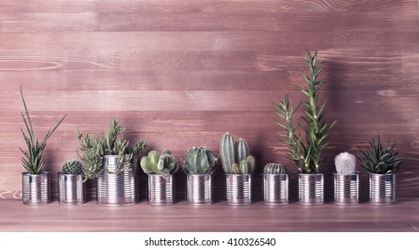 Cactus and succulents on a wooden background. Recycle aluminum can. Retro filter effect