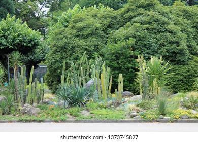 Cactus and succulents park in Locarno Switzerland