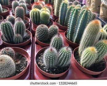Cactus, suculent, Succulent, cactus, colorful cactuses, Lots of different succulents