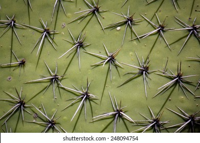 Cactus surface with spikes