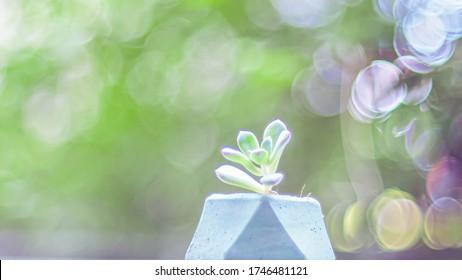 Cactus in sweet pastel green blue Concrete pot. Modern geometric concrete planter on blur bokeh background. environment and lifestyle modern life idea