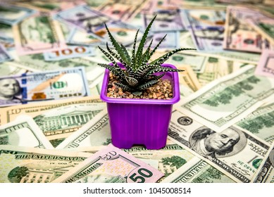 Cactus as a symbol of growth of the us currency