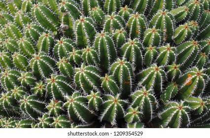 cactus that could be used as a background