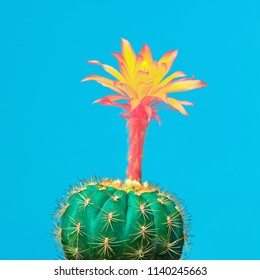 Cactus tropical. Minimal Concept. Contemporary Art. Trendy Color. Creative Modern Cacti Style