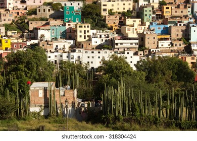 Cactus and vegetation  in front of hillside housing in Guanajuato, Mexico