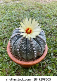 It is a cactus very beautiful.
