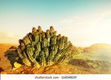 Cactus in Western Sahara