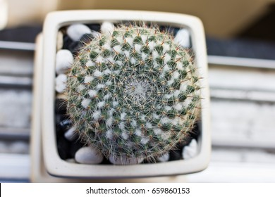 cactus in white pot