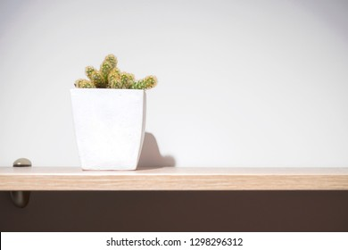 Cactus in a white pot on wooden shelf, white wall