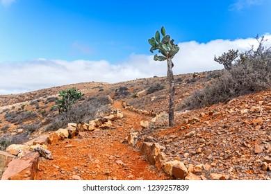 Cactus in Wild Volcanic Landscape, Fuerteventura, Canary Islands