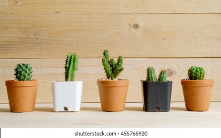 Cactus wood on wood Still Life Natural Three Cactus Plants on Vintage Wood Background Texture.