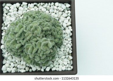 Cactus,succulent in pot with copy space