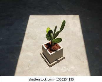 Cacuts under strong light in empty room