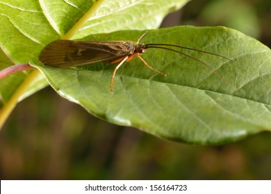 caddis fly on branch