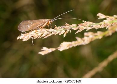 caddisfly, autumn (macro crop)
