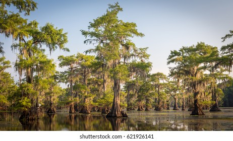 Caddo Lake on a calm morning. Classic bayou swamp scene of the American South featuring bald cypress trees reflecting on murky water in Caddo Lake, Texas, USA