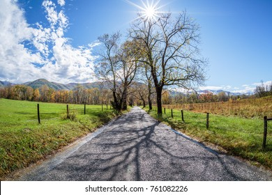 Cades Cove Trees with Sunburst - Great Smoky Mountains National Park