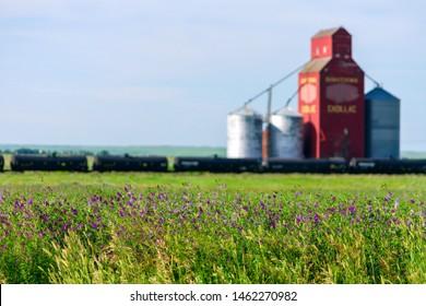 Cadillac, Saskatchewan, Canada - July 8, 2019:  Landscape scenic view of alfalfa field and old wood grain elevator in the Canadian prairie town of Cadillac, Saskatchewan, Canada.