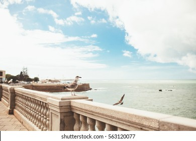 cadiz spain city andalusia view ocean