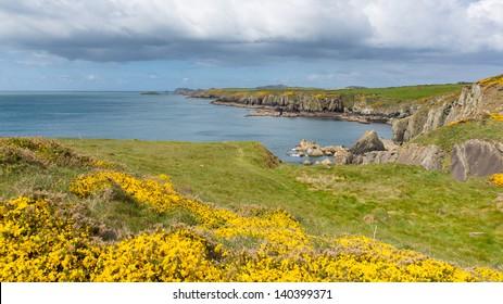 Caerfai Bay Pembrokeshire West Wales UK near St Davids and in the Coast National Park.   The Pembrokeshire Coast Path passes alongside the bay.