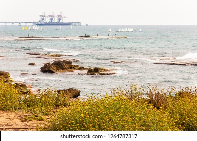 Caesarea, Israel - May 22, 2012: Blooming yellow grassy flowers, fishing fishermen on flat stone, many surfers in the Mediterranean sea waters and Orot Rabin, a coal-fired power station