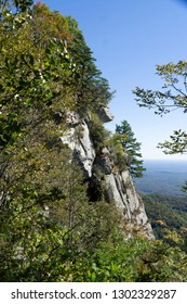 Caesar's Head SC Mountainside Tree