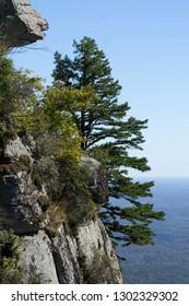 Caesar's Head SC Mountainside Tree Close