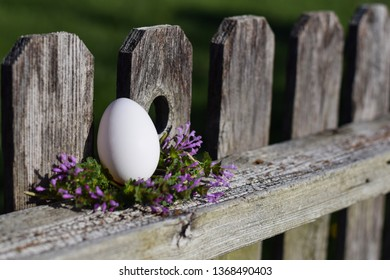 A cage free, farm fresh, chicken egg nestled among henbit flowers on a natural wood fence