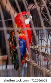cage with a parrot on the bird market
