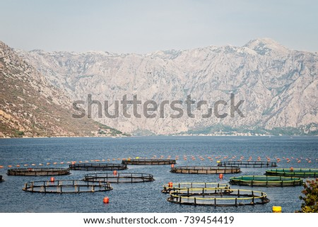 Cages Fish Cultivation Fish Farming On Stock Photo (Edit Now ...