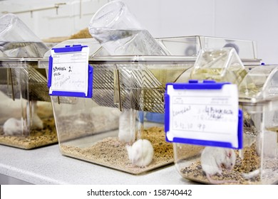 cages with white mouse in the biology laboratory