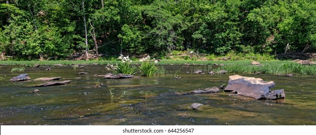 Cahaba River 2017 season reflections of Cahaba Lily with rocks in foreground