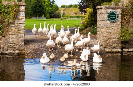 Cahir, County Tipperary, Ireland - July 13, 2016: Geese at Cahir Castle.