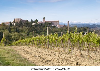Cailhau, Aude, France. 05/07/19 Spring vines on southern sloping hillside witth the village of Cailhau beyond. The snow covered pyrenees mountain on the horizon
