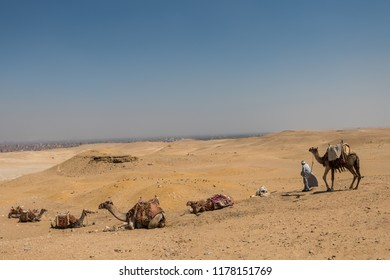 Cairo, Egypt, August 13th, 2018: A lonely Egyptian man and Camels in the Giza pyramid complex, an archaeological site on the Giza Plateau, on the outskirts of Cairo, Egypt.