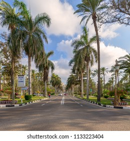 Cairo, Egypt - May 12 2018: Asphalt road framed by trees and palm trees with partly cloudy sky in a morning summer day at Montana public park, Alexandria, Egypt