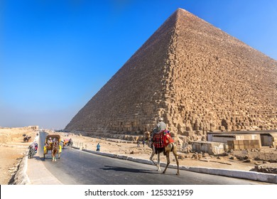 Cairo, Egypt - Nov 4th 2018 - Locals using camels around the pyramids of Giza in Cairo in a clear blue sky day in Egypt