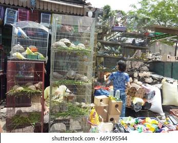 Cairo's pet shop