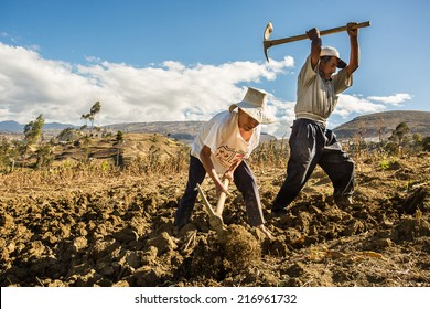 CAJAMARCA, PERU - CIRCA 2014: Two farmers work in the field circa 2014 in Cajamarca, Peru.